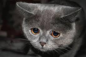 O copila de cativa ani loveste in ultimul hal o pisica! Familia filmeaza si se distreaza copios