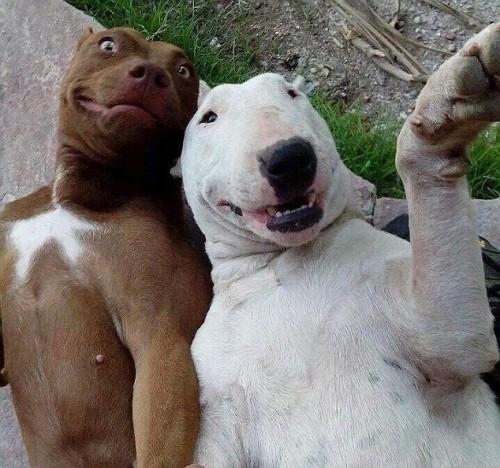 Un nou mod de a face FOTOGRAFII REUȘITE cu animalul de companie. A creat ISTERIE printre cei dornici de selfie-uri / FOTO în articol