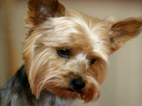 Sunteți de acord să PLĂTIȚI TAXE pentru animalele de companie ţinute la bloc?