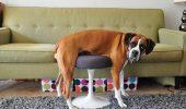 8 caini care nu au inteles care e treaba cu mobila ! Galerie FOTO