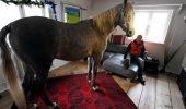 """Un cal obraznic. """"L-am băgat în casă ca să nu răcească şi n-a mai vrut să iasă"""""""
