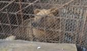 Bears_Janukowitsch residence01
