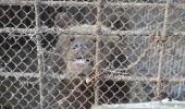 Bears_Janukowitsch residence03