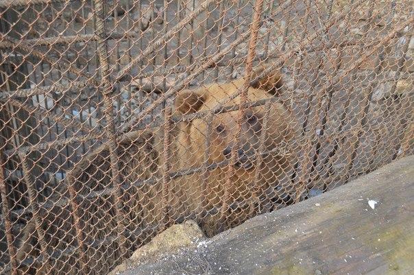 Bears_Janukowitsch residence06