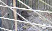 Bears_Janukowitsch residence07