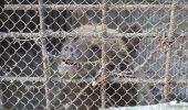 Fostul presedinte ucrainean crestea 5 ursi la resedinta lui din munti! Ii tinea in conditii inumane :(
