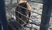 Bears_Janukowitsch residence10