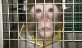 DIRECTORUL DE LA ZOO CLEVELAND A CHEMAT PERSONALUL UNOR COMPANII PENTRU A FACE TESTE PE ANIMALELE DIN ZOO.