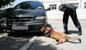 Câinele polițist Omu a prins trei traficanți într-o singură zi!