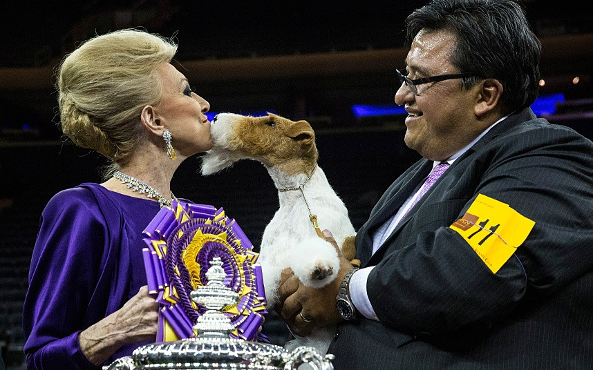 Sky the Wire Fox Terrier 'kisses' judge Betty Regina Leininger after winning the Best in Show category in the Westminster Dog Show, New York