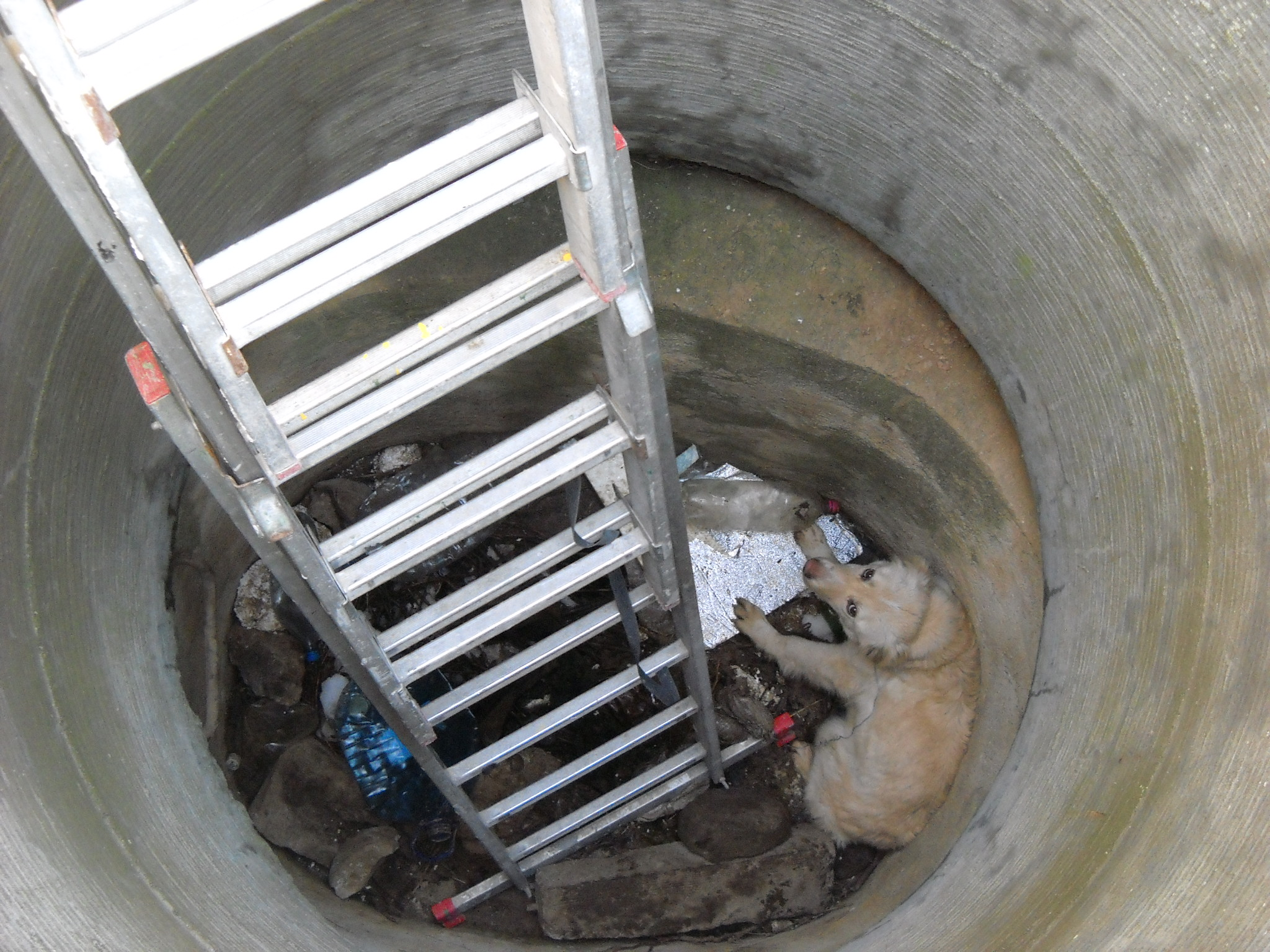 Dog Valentina  thrown in a Sewer   RO   2014
