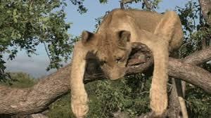 """Din ciclul """"am baut alcool de sete"""", animalele din Africa trag la masea de zici ca-i concurs!"""