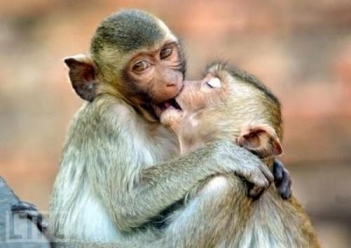 animale indragostite (1)