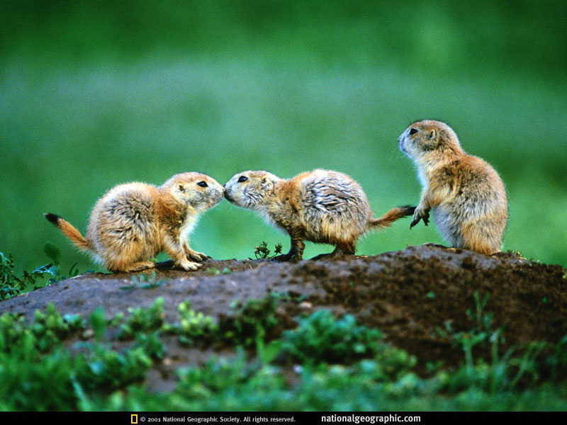 animale indragostite (11)