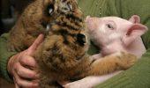 Iubitorii de animale sunt în delir! Uite câte animale SĂLBATICE are acasă un medic / FOTO-VIDEO