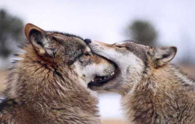 animale indragostite (8)