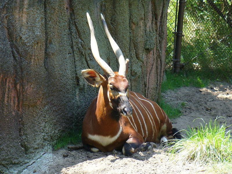 "DIN 2006 PANA IN 2009,   Missouri Dickerson Park Zoo A VANDUT ""SURPLUSUL"" DE GIRAFE, ZEBRE, CANGURI SI ANTILOPE EXOTICE UNOR PERSONAJE DUBIOASE CARE LE-AU DAT DRUMUL IN LIBERATE APOI LE-AU VANAT."