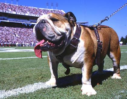 Bully the Bulldog