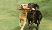 Patru reguli esențiale ca să ai un câine educat