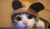 cat fashion (1)