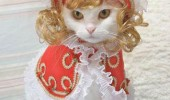 cat fashion (10)
