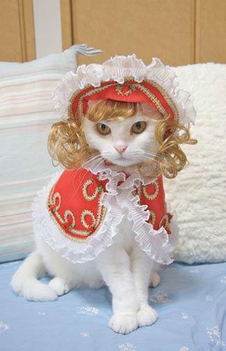cat fashion (10)