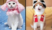 cat fashion (15)