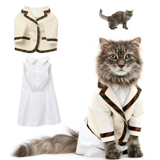 cat fashion (20)