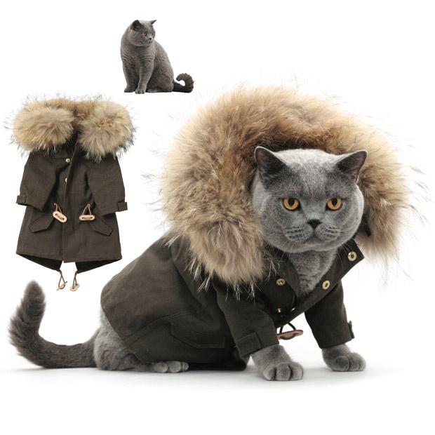 cat fashion (23)