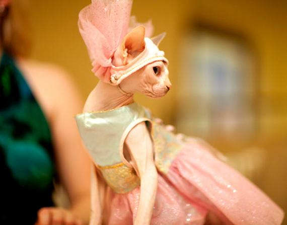 cat fashion (26)