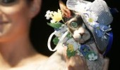 cat fashion (3)