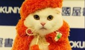 cat fashion (4)