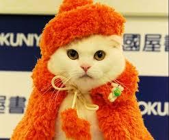 cat fashion (4)