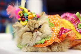 cat fashion (5)