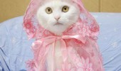 cat fashion (6)
