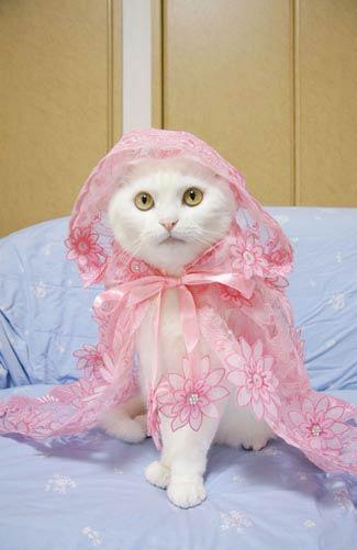 cat fashion (6)