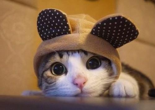 A comandat o pisică online! Când a deshis cutia a avut parte de o surpriză ȘOCANTĂ. Uite ce a găsit