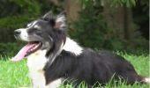 Câinele ăsta ţine mingea în aer mai mult ca MESSI!!! Video senzaţional