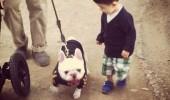cei mai buni prieteni copil si caine bulldog (10)