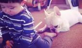 cei mai buni prieteni copil si caine bulldog