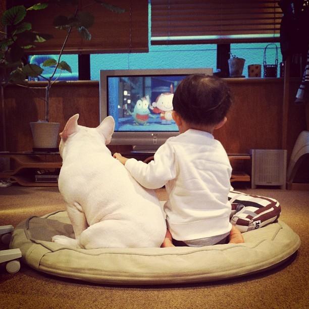 cei mai buni prieteni copil si caine bulldog (2)