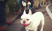 cei mai buni prieteni copil si caine bulldog (6)