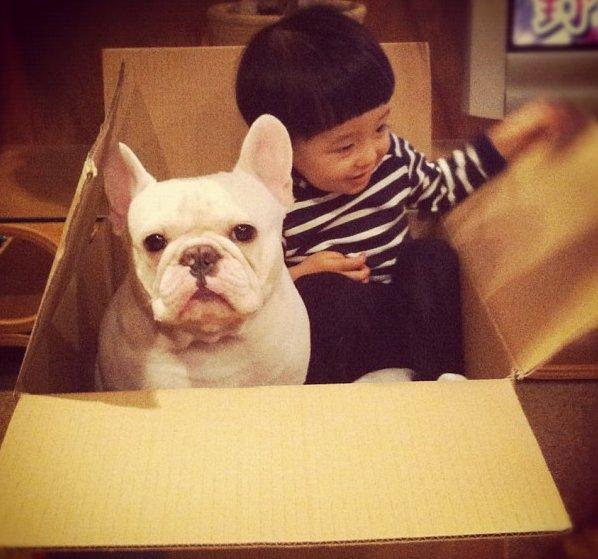 cei mai buni prieteni copil si caine bulldog (7)