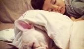 cei mai buni prieteni copil si caine bulldog (9)