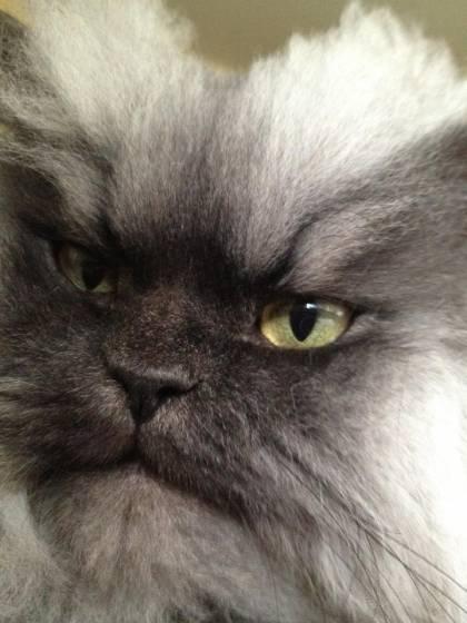 Colonelul Meow