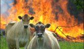 Flatulenţele văcuţelor au provocat o EXPLOZIE! Ferma a luat foc