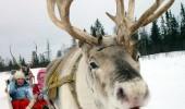 funny-reindeer-03
