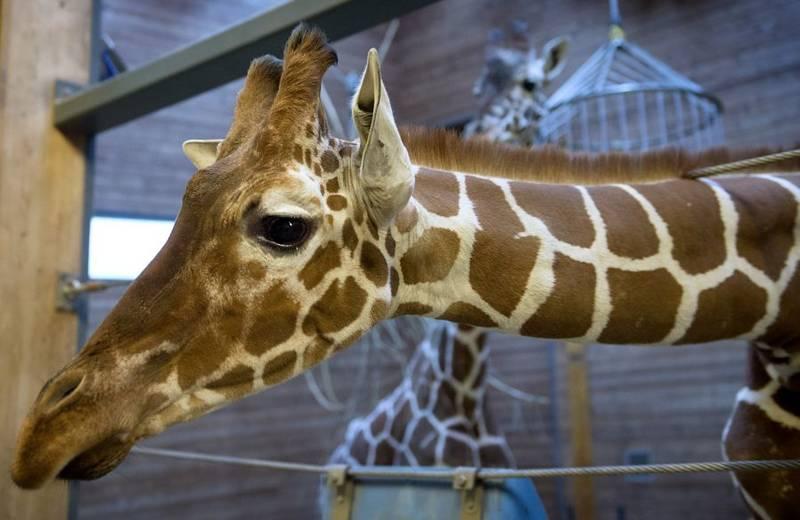 girafa1_02_bb0edba135