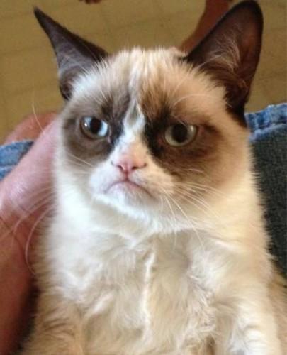 grumpy-cat-net-famous__width_420