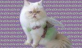 Luna, pisicuţa FASHION – Uite cum arată o mâţă îmbrăcată în pas cu moda şi cu unghiile date cu ojă!